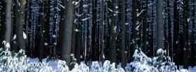 free nature winter in the forest facebook cover