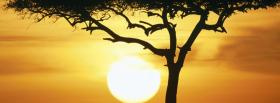 free nature masai mara kenya facebook cover