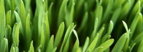 free nature the green grass facebook cover