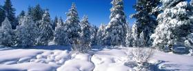 nature snow and forest facebook cover