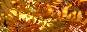free nature the colorful season facebook cover