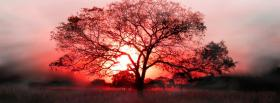 free safari tree pink sky facebook cover