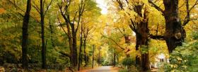 free little road in the forest facebook cover