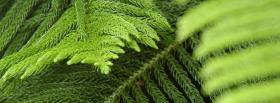 free nature green leaves facebook cover