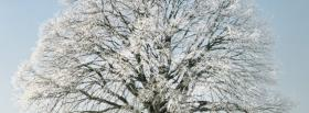 free nature beautiful tree in the winter facebook cover