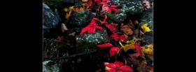free colorful autumn leaves facebook cover