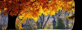 free nature autumn trees facebook cover