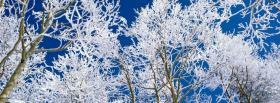 free nature lovely trees in the winter facebook cover
