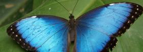 nature splendid blue butterfly facebook cover