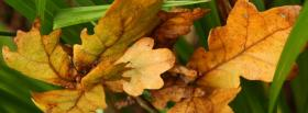 free orange autumn leaves facebook cover