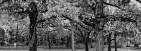 black and white trees facebook cover