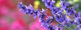 free blue flower on pink facebook cover