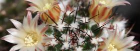 free cactus flowers nature facebook cover