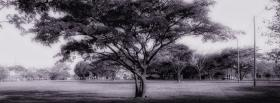 free black and white tree facebook cover