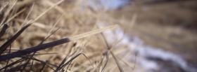 free dried out grass nature facebook cover
