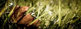 free grass dried leaf nature facebook cover