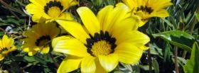 free nice yellow flowers nature facebook cover