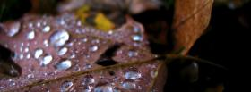 free autumn rain nature facebook cover
