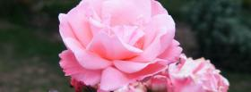 free baby pink flower nature facebook cover