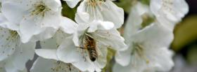 free bee white flower nature facebook cover
