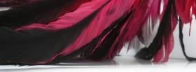 free fusia feathers nature facebook cover