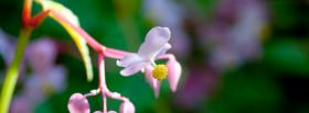 free mini flower nature facebook cover