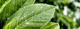 free green fresh leaves nature facebook cover