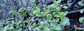 free growing green plants nature facebook cover