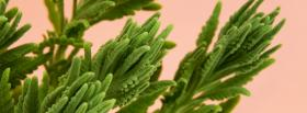 free lavender leaves nature facebook cover
