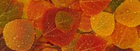 free fall colors nature facebook cover