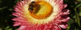 free bee and pink flower nature facebook cover