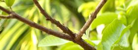 free branch leaves nature facebook cover