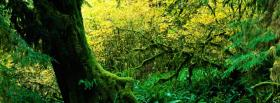 free hoh rain forest nature facebook cover