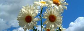 free large white flowers nature facebook cover