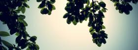 free leaves and sun nature facebook cover