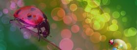free lady bug bubbles nature facebook cover
