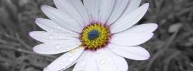 free black and white color facebook cover