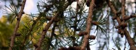 free branches nature facebook cover