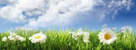 free garden of daisies nature facebook cover