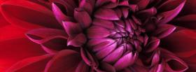 free fusia flower nature facebook cover