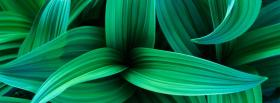 free leaves grass nature facebook cover