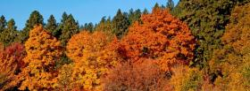 free autumn trees nature facebook cover