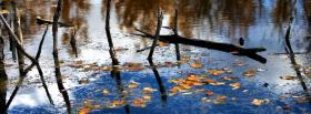 free floating leaves nature facebook cover