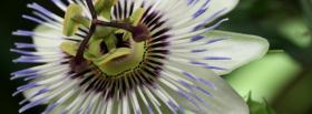 free interesting flower nature facebook cover