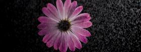 free flowers in the rain nature facebook cover