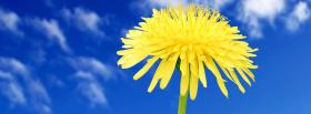 free blue sky and flower nature facebook cover