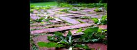 free growing weeds nature facebook cover