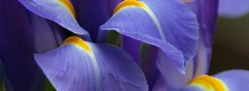 free blue petals nature facebook cover