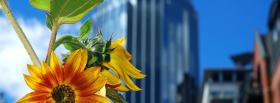free flowers and buildings nature facebook cover