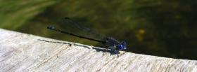 free blue insect nature facebook cover